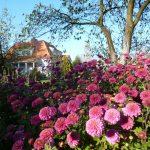 Jesień a jeszcze kwiaty naokoło